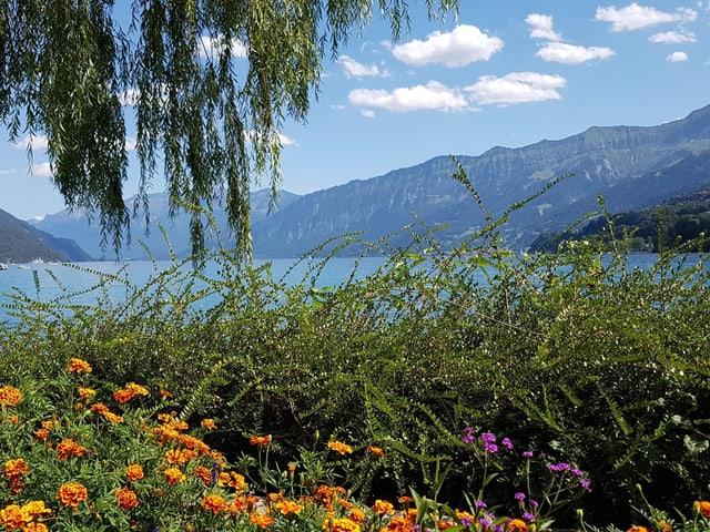 Eine Blumenwiese am Ufer des Sees.