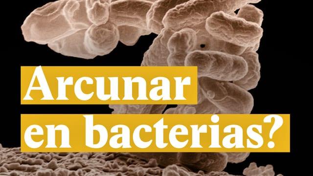 Laschar ir video «Arcunar en bacterias?»