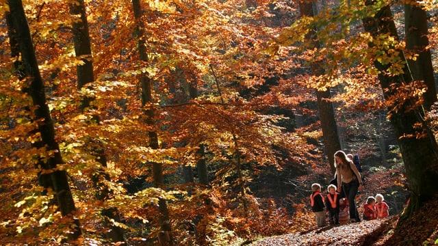 Kinder sind im Wald unterwegs