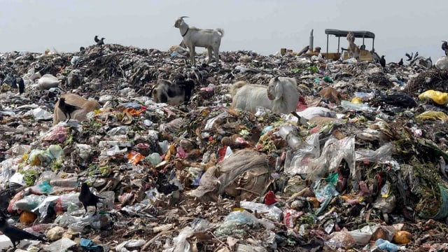 Ein Bulldozer verteilt auf einer riesigen Müllhalde nahe der Metropole Colombo in Sri Lanka den Kehricht.
