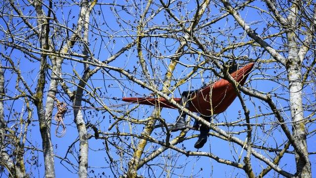 Ein Aktivist liegt in einer Hängematte hoch oben in einem Baum.