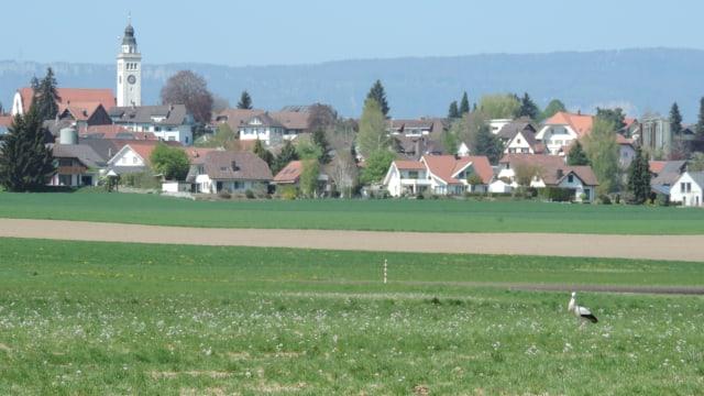 Grüne Wiese mit einem Storch, im Hintergrund die Gemeinde Aeschi im Kanton Solothurn