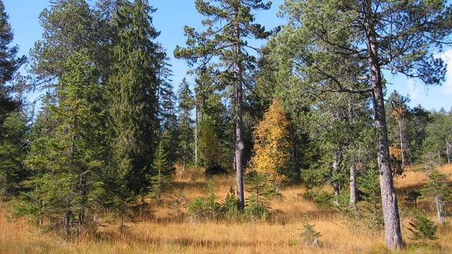 Ein Blick in den Furenwald bei besten Wetterbedingungen.