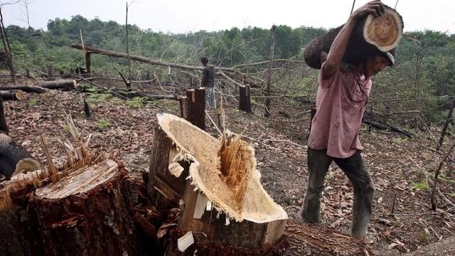 Ein Wald in Indonesien wird gerodet. Ein Mann trägt einen Baumstamm weg.
