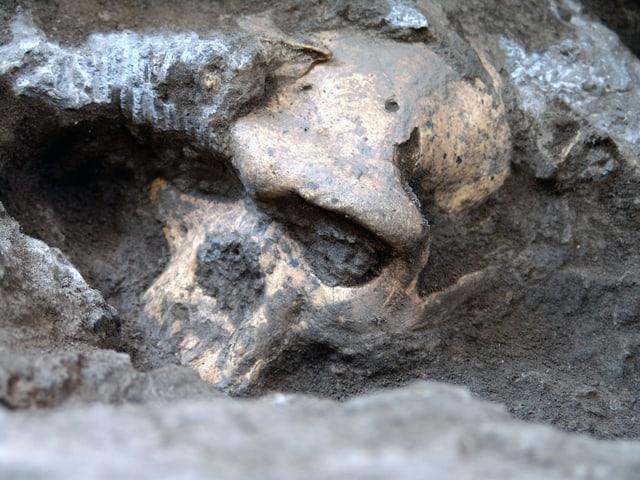 Der  Kopf des urzeitlichen Menschen am Fundort, noch bedeckt von Schlamm