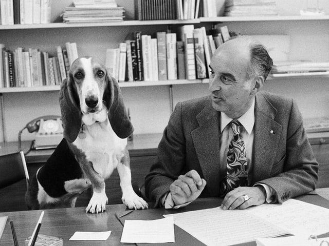 Hund auf Schreibtisch des Dirigenten.