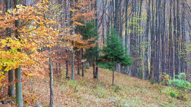 Mischwälder eignen sich für die Pilzsuche.