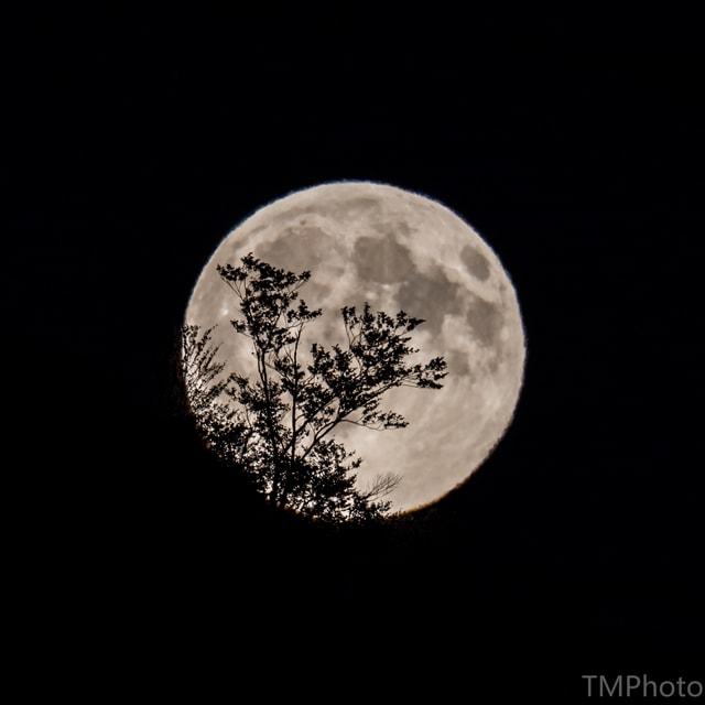 Heller Mond mit Strauchschatten