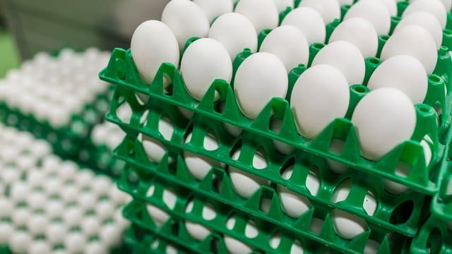 Grüne Plastikpaletten voller weisser Eier.