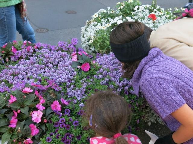 Duftende Blumen auf dem Berner Kornhausplatz
