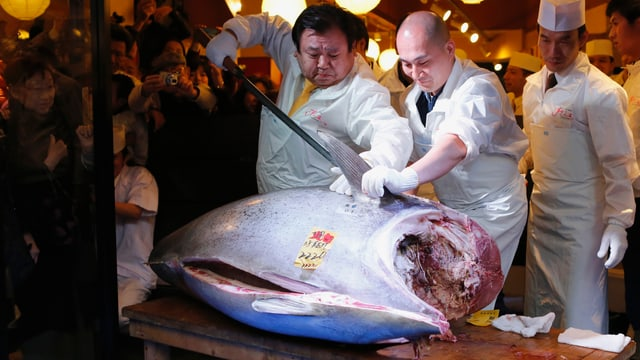 Teuerster Fisch aller Zeiten - Auktion in Tokio