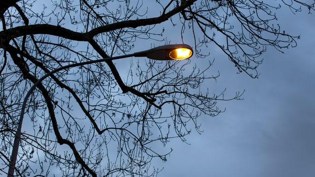 Leuchtende Strassenlaterne von Unten, davor Äste eines Baums.