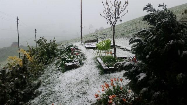 Leicht verschneiter Garten in Gonten