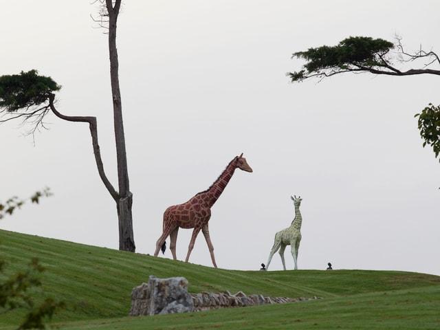 Giraffen-Statuen auf Kim Dotcoms Anwesen in Neuseeland.