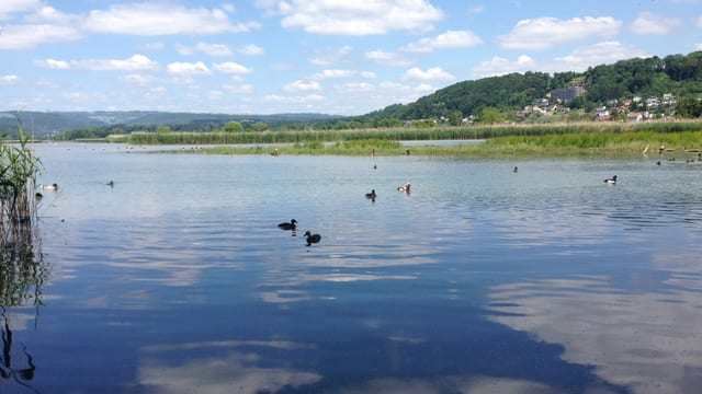 Enten auf einem See