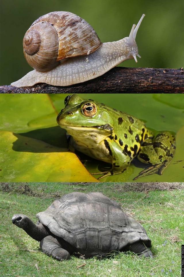 divers animals che fan ina marveza d'enviern