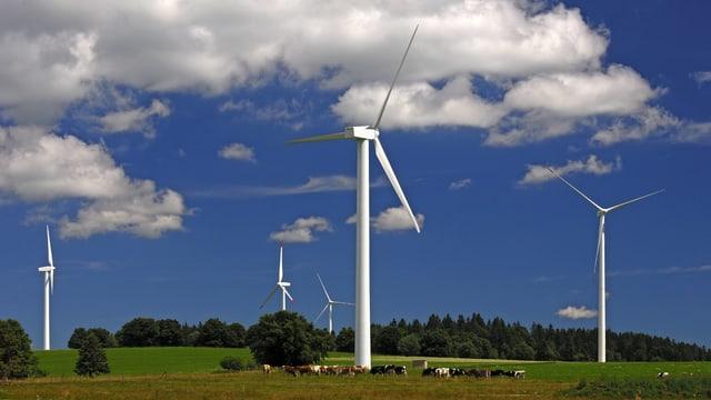 Windräder in der Landschaft, Kühe weiden.