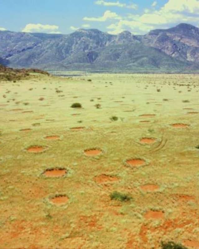 Feenkreise in Namibia