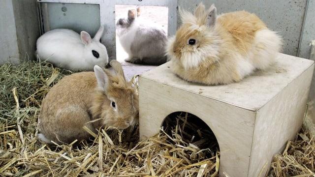 Kaninchen in einem Stall