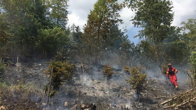 Ein abgebranntes Stück Wald.