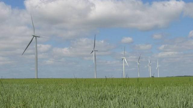 Windräder auf einem weiten Feld