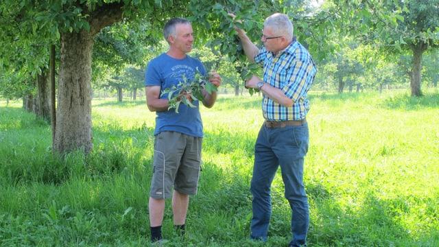 Bauer Ivo Sager und Richard Hollenstein vom kantonalen Landwirtschaftszentrum vor einem Apfelbaum