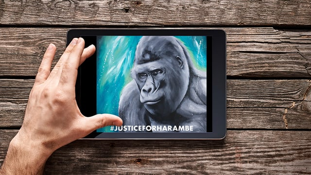 Eine Zeichnung des Gorillas Harambe auf einem Ipad, das auf einem Tisch liegt.