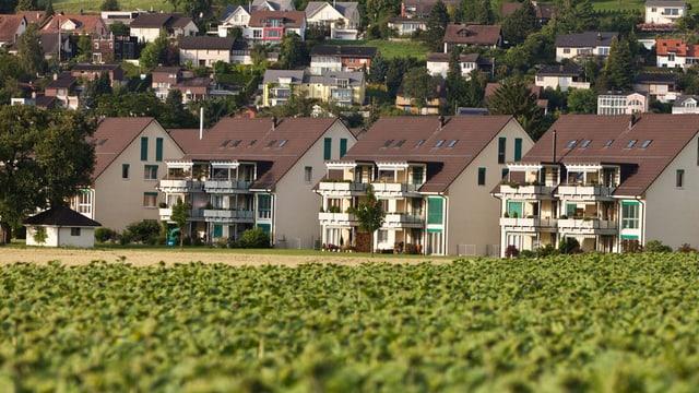 Blick über ein Sonnenblumenfeld auf die Gemeinde Bassersdorf.