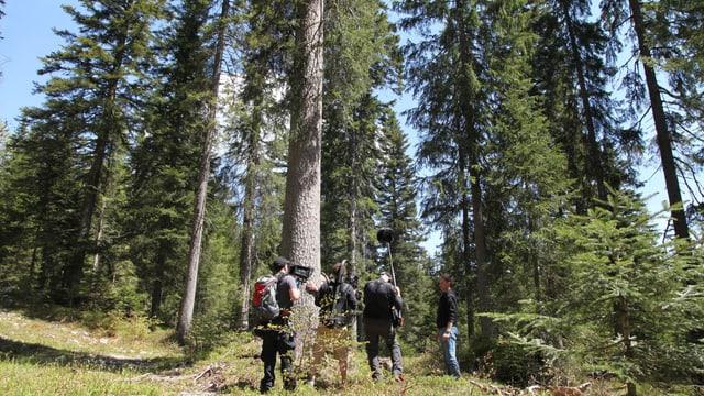 Kamerateam vor riesigen Fichtenbäumen.