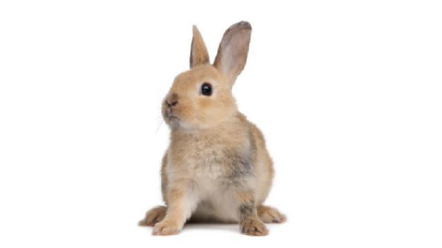 Die Bedürfnisse der Kaninchen