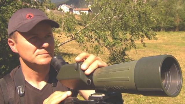 Video «Volkszählung in der Vogelwelt» abspielen