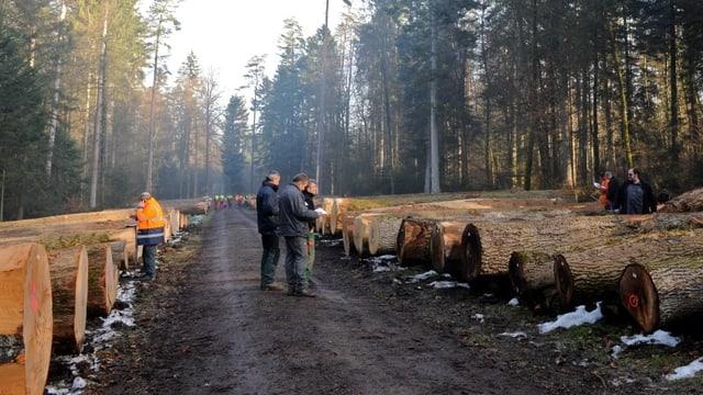Baumstämme in Reih und Glied neben einem Waldweg.