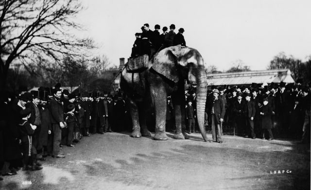 Ein altes Foto: Ein Elefant steht auf einem Platz, auf seinem Rücken sitzen Menschen. Um ihn herum stehen viele weitere Menschen