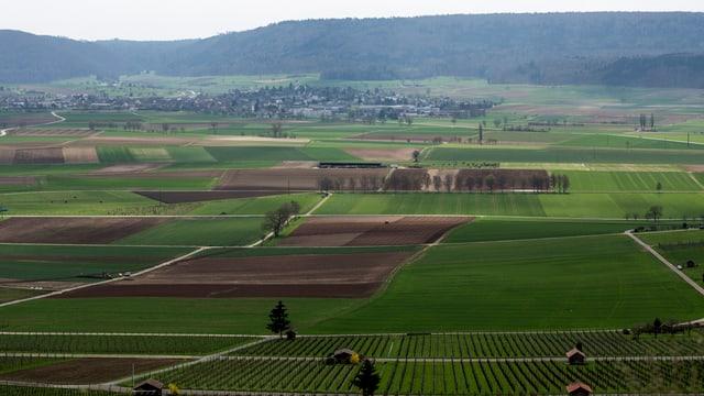 Der Weinberg von Hallau, im Hintergrund das Dorf Neunkirch.