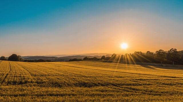 Sonne über Horizent. Felder und Bäume. Blauer HImmel.