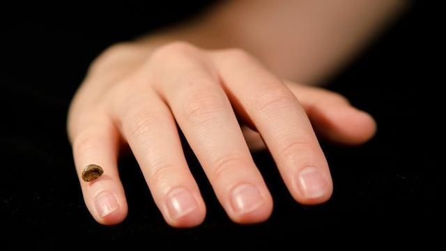Ein Knochenfundstück platziert auf einer Hand