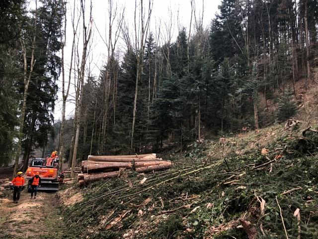 Holzarbeiten im Wald.