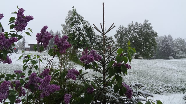 Frisch verschneite Flühlings-Landschaft.