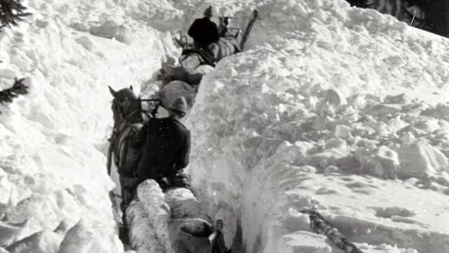 Transport da laina cun chavals tras la naiv.