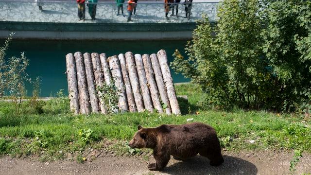 Bär geht einem Weg im Bärenpark entlang, im Hintergrund Menschen.