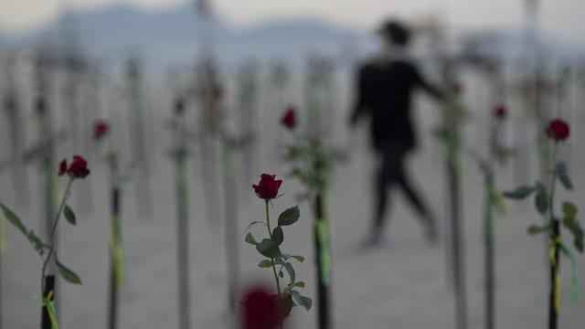 Rosen stecken im Sand an der Copacabana in Rio de Janeiro.
