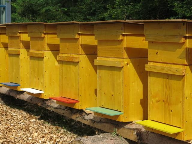 Leere Bienenkisten