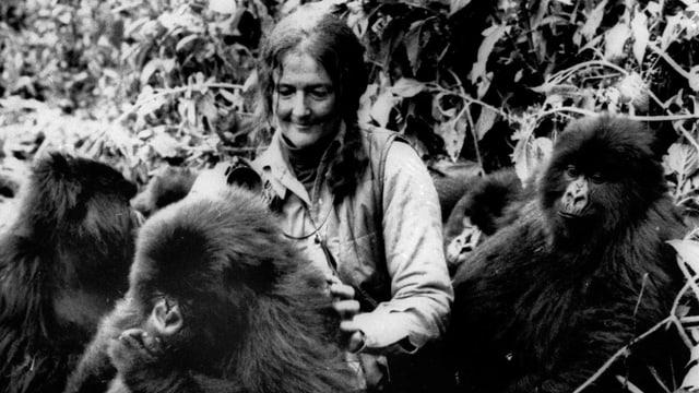 Dian Fossey im Jahr 1982 in Ruanda in der Region der Virunga-Berge.