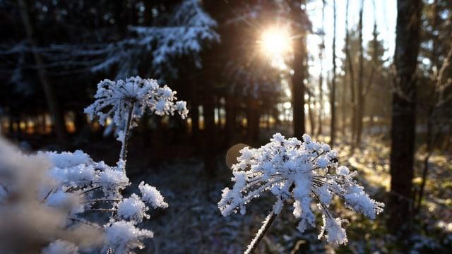 Frost im Wald