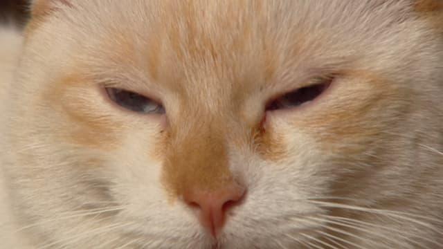 Zwei weisse Katzen sitzen auf einer Betontreppe.