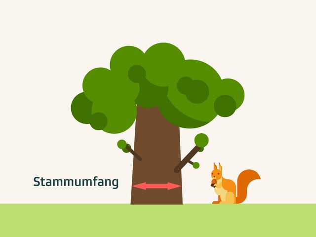 Symbolbild dicker Baum