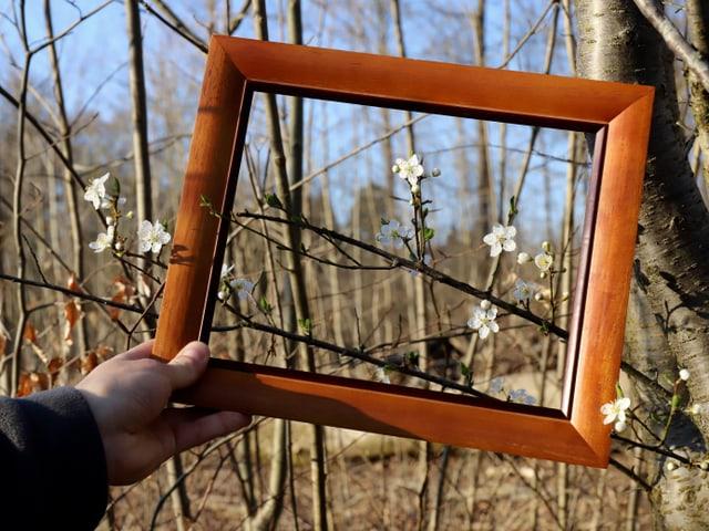 Baumblüten eingerahmt