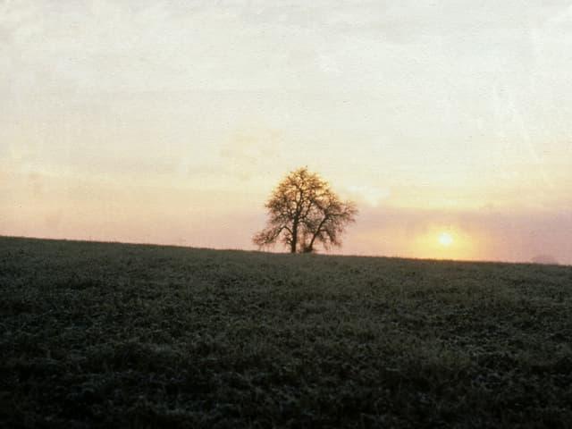 Sonnenaufgang. Ausserhalb des Nebels hat sich Bodenfrost gebildet.