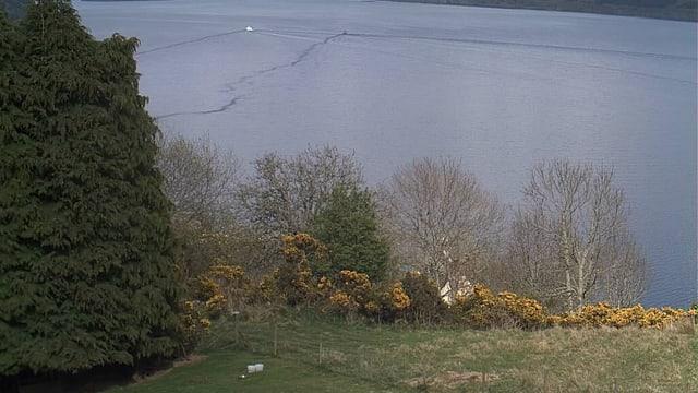 Die Webcam von Loch Ness.