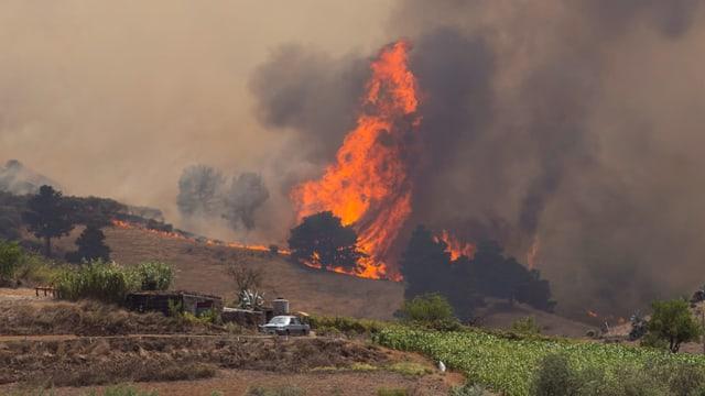 Feuersbrunst auf Gran Canaria ausser Kontrolle